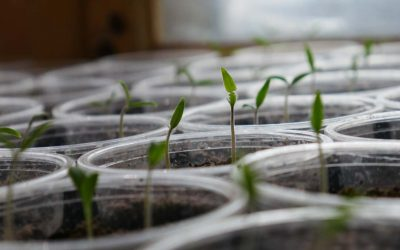 How Your Church Plant Can Plant Churches Early On
